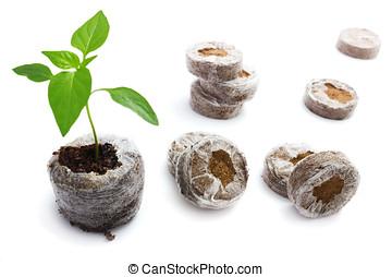 Crecer, turba, Briquetas, Plantas de semilla