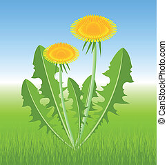 Dandelion herb on spring meadow