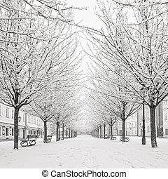snow tree on Kampa island, Prague - morning view on snow...