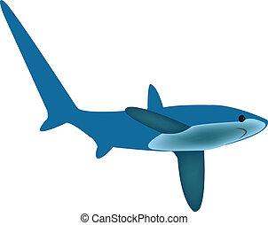 trilladora, tiburón