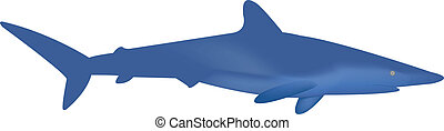 Blue Shark - This is a vector of a Blue Shark
