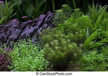 green plant in under water aquarium use for multipurpose