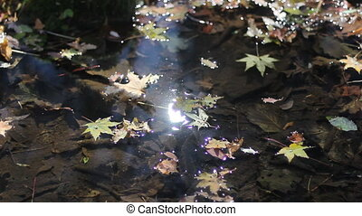 autumn leaves in the water in current river