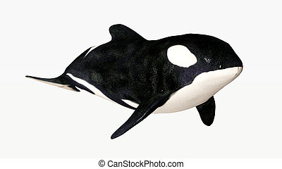 Orca - Computer generated 3D illustration