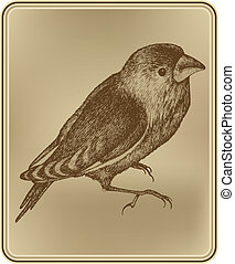 Bird with a vintage frame, hand-drawing. Vector illustration.