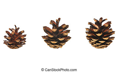 pinecones - three pinecones isolated on white background
