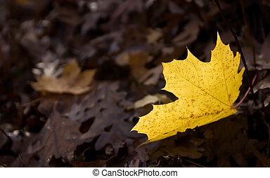 Fallen - A leaf fallen on the ground