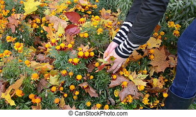 hands take leaves flower