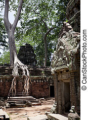 Ta Prohm - Temples of Angkor. Ta Prohm