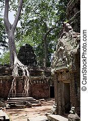 Ta Prohm - Temples of Angkor. Ta Prohm
