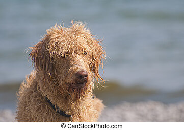 Bad Hair Day - Bad hair day at the beach for this...