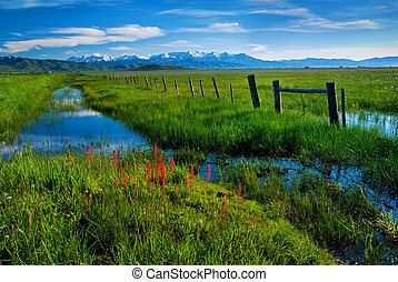 Fence and Creek along a rich green Marsh - The Mountains...