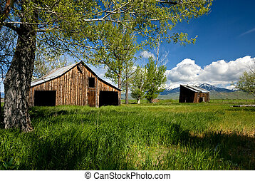 Old abandon Farm in Idaho - Forgoten by time this old barn...