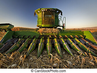 Corn Combine - The sun seting on this Combine set up for...