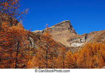 Autumn trees on mountain - Autumn trees on mountain (alpe...