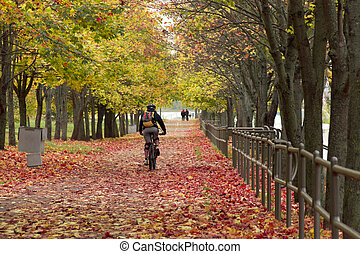 Man rides a bicycle in the autumn park - The man rides a...