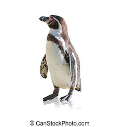 Portrait Of Penguin Isolated On White Background