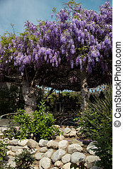 Wistaria Canopy - Delicate wistaria blooms are supported by...
