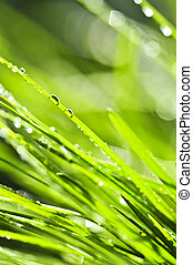 Green grass background - Natural background of dewy green...