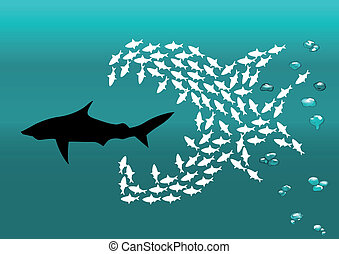 flock of small fish and shark - flock of small fish attacks...