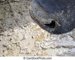 Snout - Black Snout...