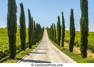 Umbria - Road with cypresses - Umbria (Italy) - Road with...