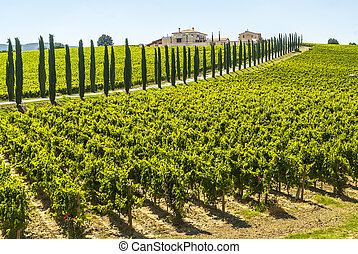 Umbria - Farm with vineyards and cypresses - Umbria (Italy)...