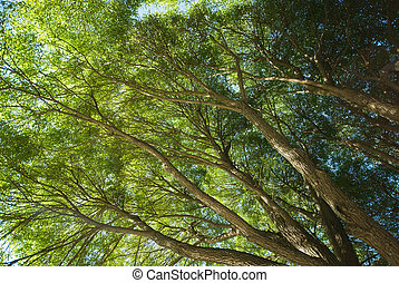 Tree tops - Beautiful foliage