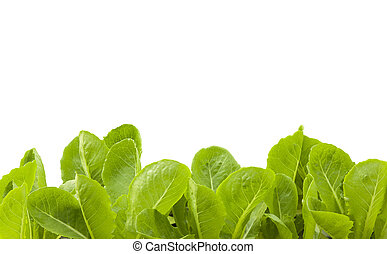 plante,  hydroponic