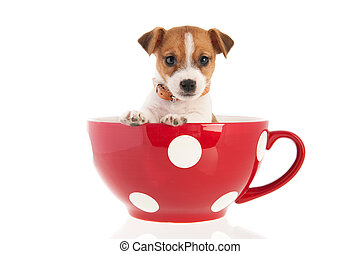 Six weeks old Jack Russel in big coffee cup - Six weeks old...