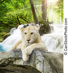 White lion with wild background.