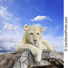 White lion with blue sky background.