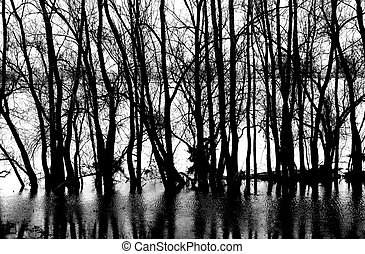 Tree reflections - The reflection from trees on the water...