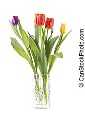 Tulip Flowers in Clear Vase on White Background