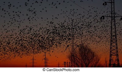 birds, crowd,sunset,sunrise,