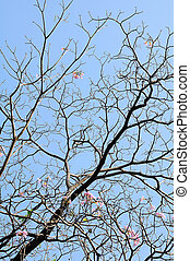 Branch of tree with sky background