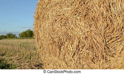 straw bale roll - straw rolls move in wind in agriculture...