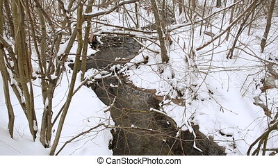 brook winter nutwood - Wild forest stream brook creek flow...