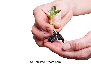 Plant in hands.