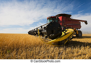 harvesting - A  combine harvester working a wheat field