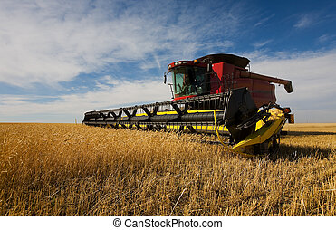Combine harvesting - A modern combine harvester working on a...