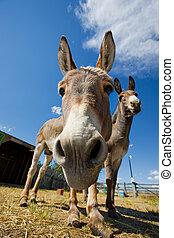 Donkey face - A close-up shot of a donkeys face