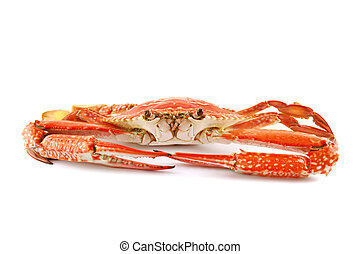 Cooked Sand Crab - Cooked sand crab or blue swimmer crab...