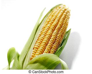 maíz, Mazorca