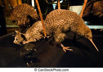 Kiwi  - Stuffed skin Kiwi and a cat.
