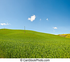 Mediterranean  Meadow - Green Sloping Meadows of Tuscany