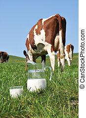 Jug of milk against herd of cows. Emmental region,...