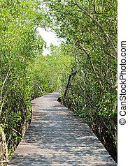 Mangrove reforestation in Thailand