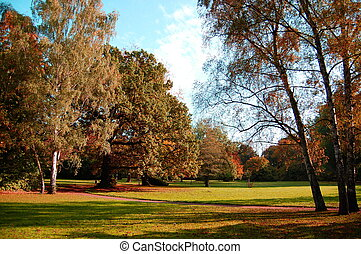 fall in the park with green trees under blue sky