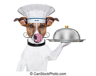 dog cook chef  - cook dog holding a serving tray with cover